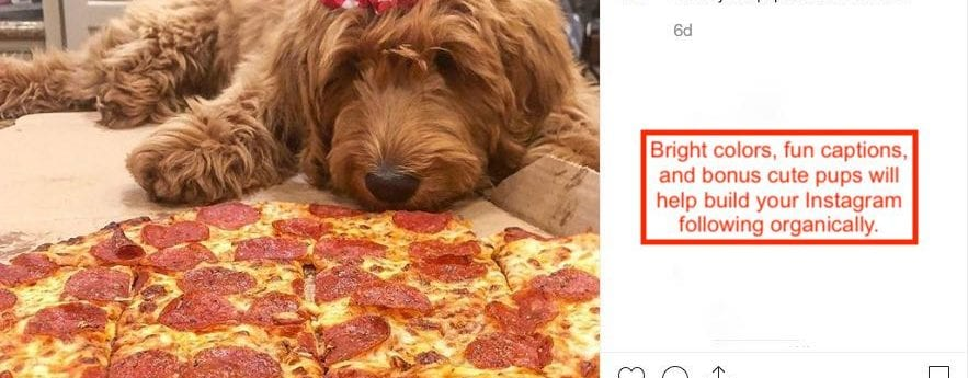 7 Best Pizza Advertising Ideas That Work in 2019 (Mostly Free)